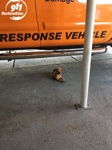 911 Restoration Puppy at our Long Island Headquarters